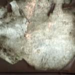 Constelacion-al-rojo_maria_paz_contreras